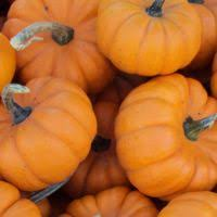Myers Pumpkin Patch Greeneville by Más De 25 Ideas Increíbles Sobre Pumpkin Patch Locations En