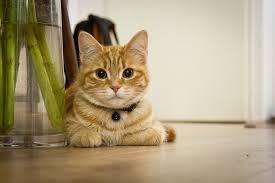 cat in house iwonderful world animals