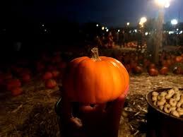 Pumpkin Patch Reno by Saana Ahonen 3 Pumpkin Patch