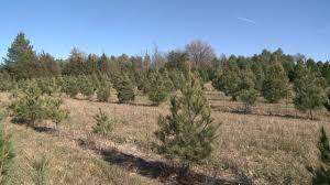 Christmas Tree Farm Lincoln Ne by No Christmas Tree Shortage In Nebraska