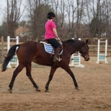 Your Aging Horse Conditioning Expert Advice On Horse Care And