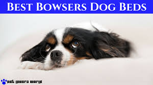 best bowsers dog beds on the market product reviews 2017 pet