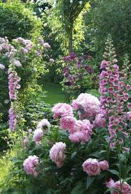 Shasta Daisy Border For Flower Bed Of Foxglove Snapdragon And Roses