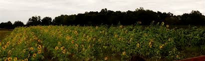 Lane Farms Pumpkin Patch 2015 by Fall Festivities At Old Baker Farm And Pumpkin Patch U2013 The Local