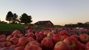 Apple Pumpkin Picking Queens Ny by Best Things To Do In The Fall In Nyc Including Halloween Events