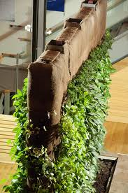 Living Wall Garden – Creating A Living Wall Plants For Indoors