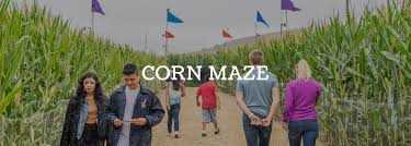 Best Pumpkin Patch Near Corona Ca by The Pumpkin Factory Live Oak Canyon Corn Maze