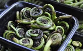 cuisine chagne climate change impacts assam s cuisine and culture the third pole