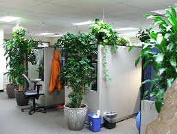 9 low maintenance plants for the office