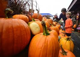 Pumpkin Picking Nj Colts Neck by Where To Go Apple U0026 Pumpkin Picking 24 Best Spots In Tristate