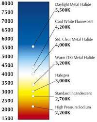 light bulb color temperature incandescent fluorescent more