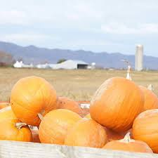 Pumpkin Farms In Georgia by These Are The Best Pumpkin Patches In Every Southern State Your