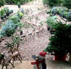 10ft Christmas Tree Uk by Christmas Tree Farm Christmas Trees Hertfordshire Dane End