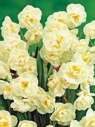 daffodil bridal