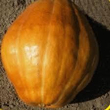 Atlantic Giant Pumpkin Taste by Vegetables Pumpkin Seeds