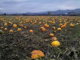 Pumpkin Patch Medford Oregon 2015 by 34 Best Roseburg Images On Pinterest Roseburg Oregon