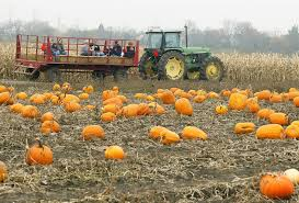 North Plains Pumpkin Patch by Portland Real Estate Blog Portland Pumpkin Patches