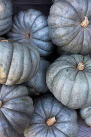Pumpkin Patch Jefferson Blvd Culver City by 83 Best Fall At Rolling Greens Images On Pinterest Pumpkins Los