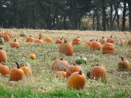 Pumpkin Patch Homer Glen Il by Fall Chicago Getaways Part I Blog Northern Illinois Tourisms