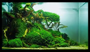 Cuisine: Best Ideas About Aquarium Aquascape On Aquascaping ... September 2010 Aquascape Of The Month Sky Cliff Aquascaping How To Set Up A Planted Aquarium Design Desiging Tank Basic Forms Aqua Rebell Suitable Plants With Picture Home Mariapngt Nature With Hd Resolution 1300x851 Designs Unique Hardscape Ideas And Fnitures Tag Wallpapers Flowers Beautiful Garden Best 25 Aquascaping Ideas On Pinterest From Start To Finish By Greg Charlet