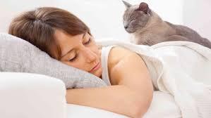 haustiere im bett vorteile nachteile vom schlafen mit