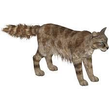 mountain cat andean mountain cat tamara henson zt2 library wiki