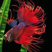 poisson pour aquarium conseils et astuces aquarium animalerie