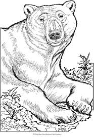 Creative Haven Wild Animal Portraits Colouring Book Dover Publications