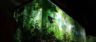 Aquarium Designer | Aquatic Art Unlimited LLC Aquascapes Unlimited Best Of Amazon Com Aquascape Micropond Kit 6 Amazoncom 58066 Stainless Steel Terwall Spillway Unique Opsixmailcom 3932 Best Images On Pinterest Aquascaping Aquariums 98948 Dry Beneficial Bacteria For Pond And Aquarilandschaften Gestalten Amazoncouk Oliver Rock Scape Aquascapez Aquarium Rocks Tutorial Natures Chaos By James Findley The Making Introduction To Red Cherry Shrimp
