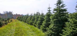 Types Of Live Christmas Trees by North Jersey Christmas Tree Farms Best Of Nj Nj Lifestyle