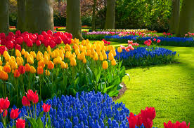 how to select plant fall bulbs property services landscape