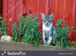 Pets: Barn Kitten - Stock Picture I2967797 At FeaturePics Gil Shuler Graphic Design Page 33 Amazoncom Playskool Friends My Little Pony Applejack Activity Melissa Doug Fold And Go Wooden Barn With 7 Animal Farms Say Archive Llama Wv Farm Pets Wallpaper Hd For 16 The Old Byre Cosy Cversion Sleeping 6 People Welcome Sunland Park Adoptions Humane Society Of El Paso Barn Owl Tshirts Hoodies Check Price Now Httpswww Store 10 Youtube In The Media Veterinary Group Dropoff Points Give A Dog Bone Keep Kitty Happy Pawhut 47 Style Deluxe Chicken Coop With Run Nesting Box