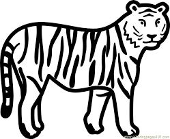 Coloring Pages Tiger Mammals
