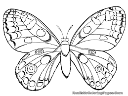 Insects Coloring Pages Realistic Insect