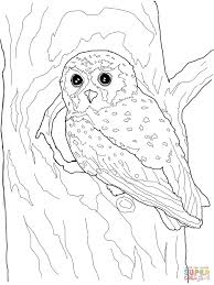 Owl Coloring Page Owls Pages Free For Kids