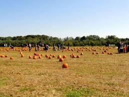 Pumpkin Picking Nj Colts Neck by Marlboro Township Completes Purchase Of Stattel Farm Marlboro