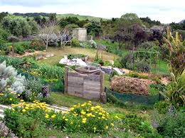 Introduction To Permaculture - Guest Post By Realeyes Homestead ... Thriving Backyard Food Forest 5th Year Suburban Permaculture Bill Mollison Father Of Gaenerd 101 Pri Cold Climate Archives Chickweed Patch Garden Design With Permaculture Kitchen Herb Spiral Backyard Orchard For The Yards Pinterest Orchards Australian House Garden January 2017 Archology Download Design And Ideas Gurdjieffouspenskycom Sustainable Farm Future Best 25 Ideas On Vegetable Youtube