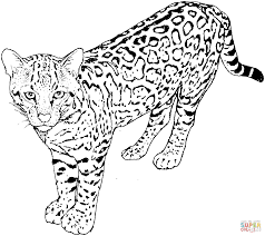 Leopard Coloring Pages Printable