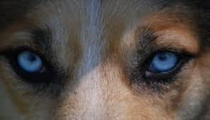 hundeerziehung für welpen 4 wichtige grundlagen hund