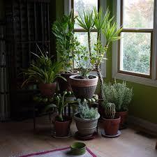pflanzen erfolgreich und gesund überwintern