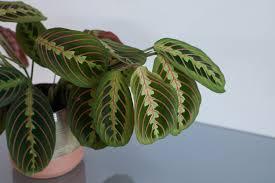 zimmerpflanzen für wenig licht top 5 der gartenflora