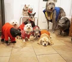 hund im bett 5 dinge die du wissen solltest my animals