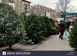Fraser Fir Christmas Trees North Carolina by New York City Fresh Christmas Trees From North Carolina Displayed