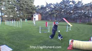 3 Masters Backyard Dog Agility Sequences - Annotated - YouTube Backyards Excellent 9 Burkes Backyard Pets Amazing Pet Rare Woolly Dog Hair Found In Northwest Blanket Q13 Fox News Agility With Australian Cattle Youtube Welsh Springer Spaniel Wikipedia How To Stop Dogs From Pooping On Your Front Lawn Dog Do It Yourself Diy Set Hurdles Jumps Gardener And Tv Personality Don Burke 3 Masters Sequences Annotated Bordoodle Pinterest Breeds Pechinez Awesome 25 Best Ideas About Outdoor Kennels On