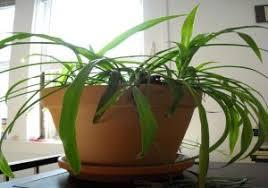 Good fice Plants New Plant Trendy Idea fice Plants No Light