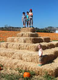 Celina Pumpkin Patch Directions by Straw Bale Slide For The Kids Pinterest Straw Bales Maze