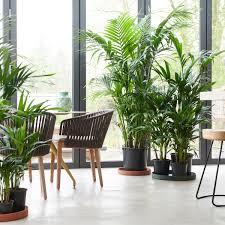 das grüne office positive effekte pflanzen am