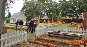 Real Pumpkin Patch Dfw by Pumpkin Patches In Plano Texas