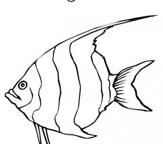 Colouring Pages Angel Fish