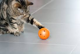 panion Animal Psychology Your Cat Would Like Food Puzzle Toys